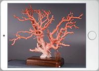 珊瑚全景の画像