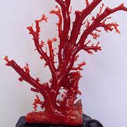 珊瑚の「色」によって買取価値が変わる