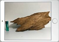 香木全形の画像